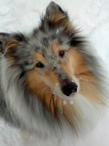 """""""Woran sollte man sich von der endlosen Verstellung, Falschheit und Heimtücke der Menschheit erholen, wenn die Hunde nicht wären, in deren ehrliches G"""