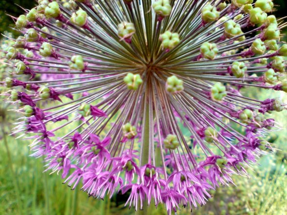 Garten 'Wie die Tage macht der Frühling...'