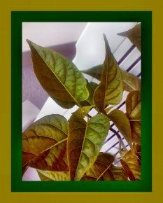 Achtung, wer kennt diese Pflanze?