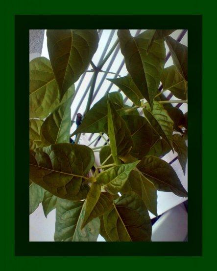 Garten 'Achtung, wer kennt diese Pflanze?'