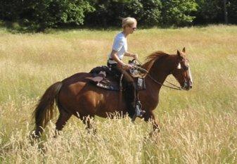 Mein verrücktes Pferd Surprise