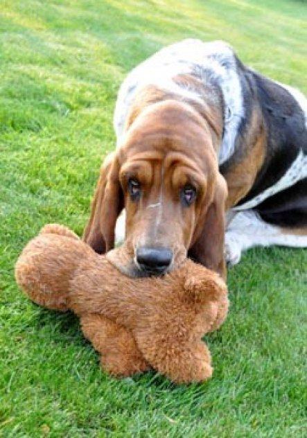 Haustiere 'superdog Beverly'