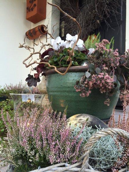 für eine herbstliche Stimmung vor der Tür sorgt: Purpurglöckchen, Erica, Alpenveilchen und Fetthenne