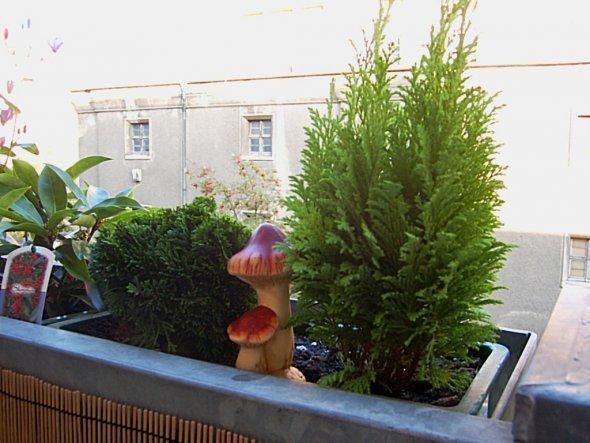 Terrasse / Balkon 'Balkon'
