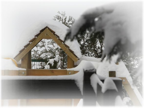 Garten 'Wintertraum 2010'