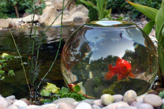 Hier haben die Fischis nun die Möglichkeit über die Wasseroberfläche zu schwimmen.