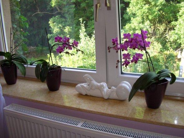 Meine 2 lila Orchideen blühen gerade wieder sehr schön. Die 2 weißen bekommen aber auch schon neue Blütentriebe.  Die weiße Skulptur ste