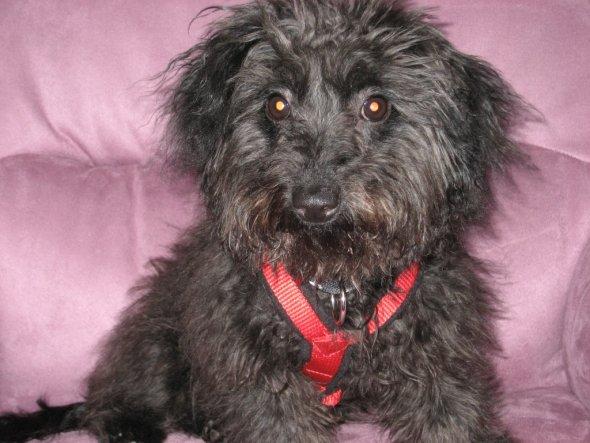 Haustiere 'Mein Hund Paula'