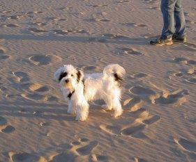 Haustiere 'Unser Hund Idefix'