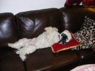 Unser Hund Idefix