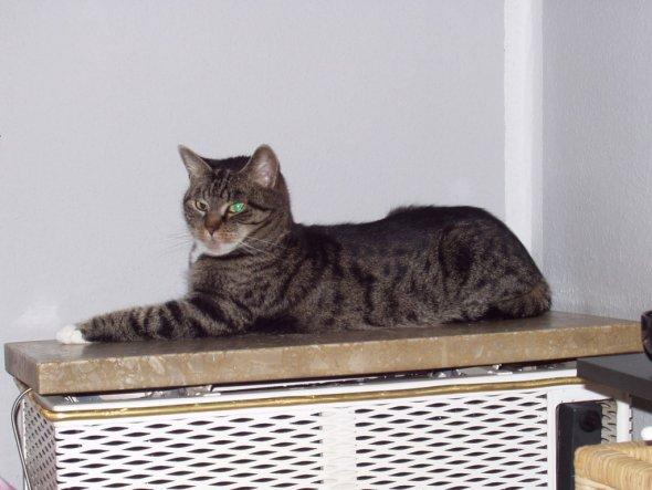 Haustiere 'Die Katze des Hauses'