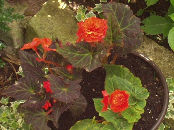 Garten 'Innenstadt-Mini-Garten'