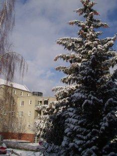 Der Winter und seine Gäste