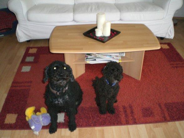 Rexi und Nico