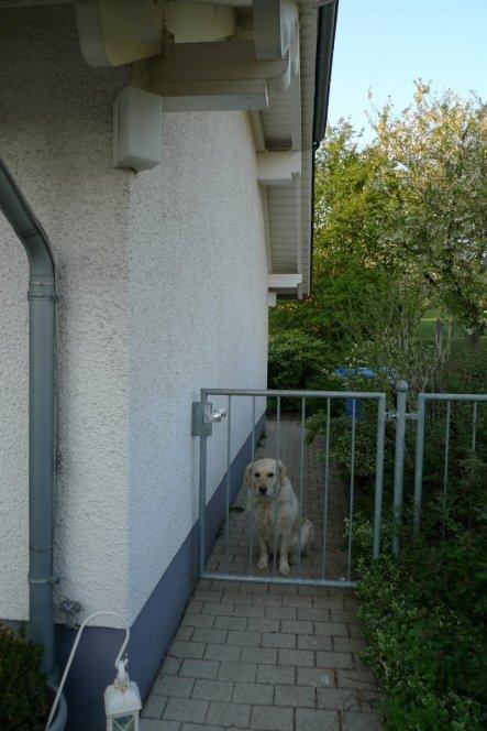 Haustiere 'Unser Wachhund'