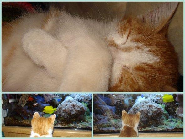 Haustiere 'Tierische Mitbewohner'