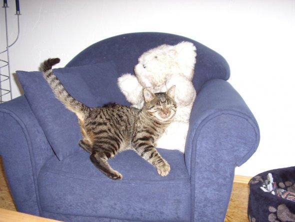 mit Teddy schmust er am liebsten