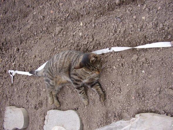 Gartenarbeit macht mich fix und fertig