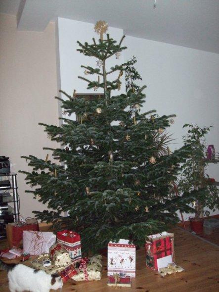 Unser riesiger Baum, der kaum in die Wohnung gepasst hat!