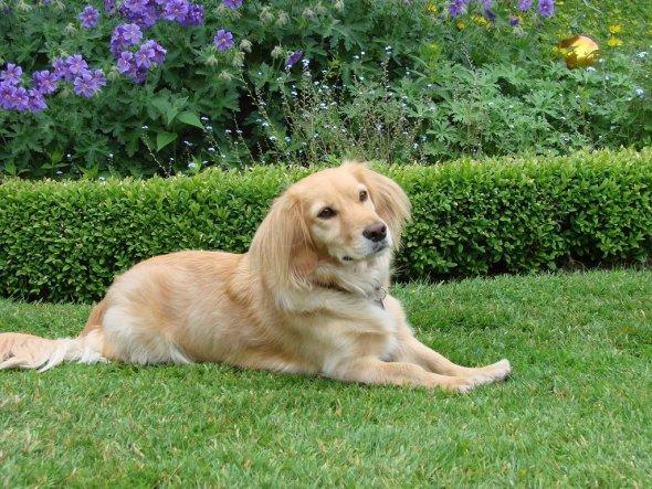Haustiere 'Unser Hund'