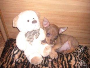 Mein  hund