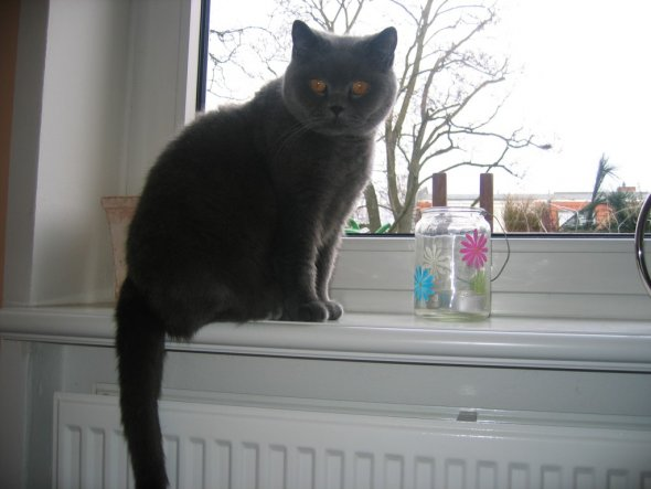 Esszimmer 'Katzenzimmer'