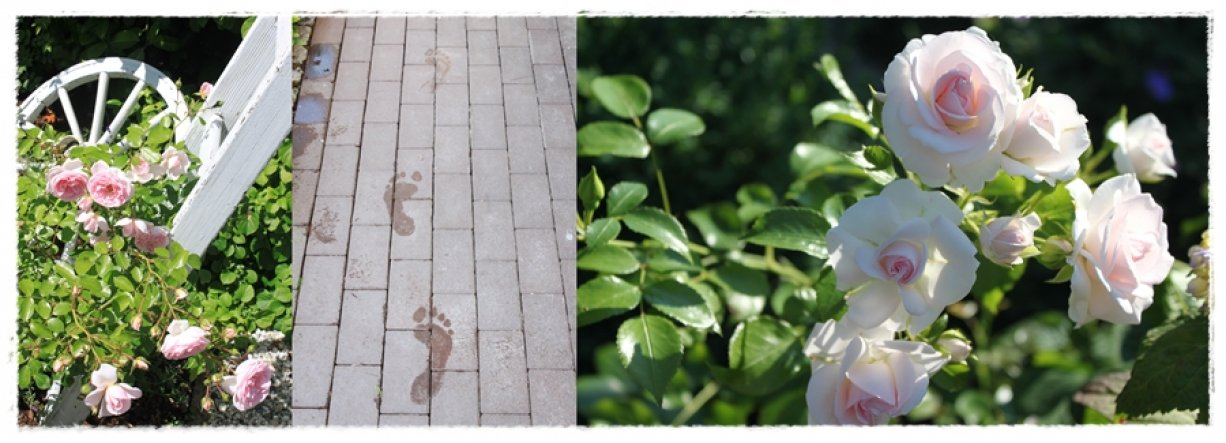 Garten '★ Gartenimpressionen'