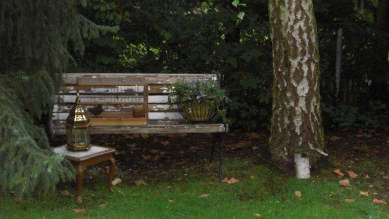 die Bank und der kleine Tisch unter der Birke werden nach dem Regen weiß gestrichen