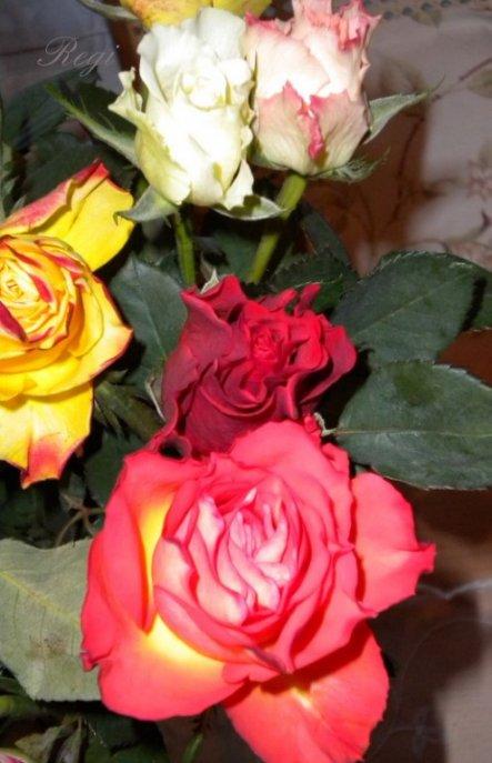 deko 39 eine rose ist eine rose ist eine 39 my home. Black Bedroom Furniture Sets. Home Design Ideas