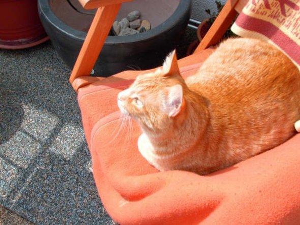 Haustiere 's´ Katzi Tatzi'