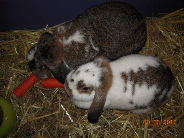 Haustiere 'Kaninchen'