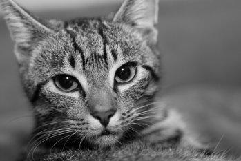 Katerchen und Kätzchen