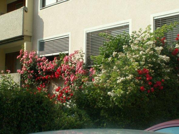 Hausfassade / Außenansichten 'von aussen gesehen'