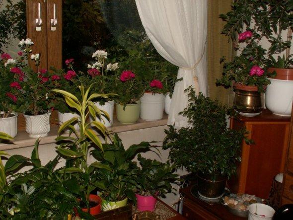 Terrasse / Balkon 'Winterquartier Balkonpflanzen'