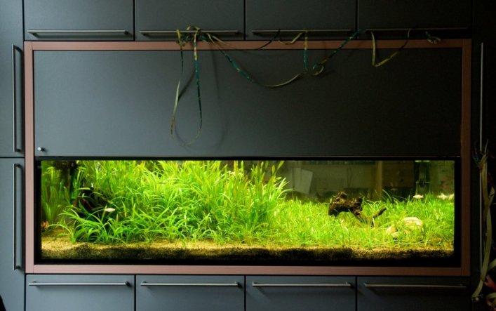 wohnzimmer 'aquarium' - berlin home - zimmerschau - Aquarium Wohnzimmer