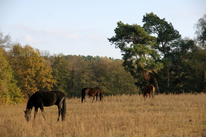 hier hat sich ein Pferdelibhaber angesiedelt, wir dürfen auch mal reiten gehen!