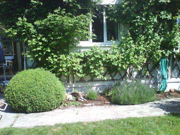 Hausfassade / Außenansichten 'Aussenbereich'