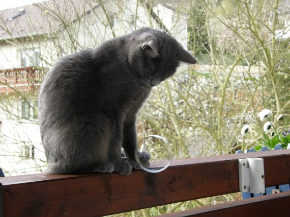 Haustiere 'Meine drei Katzen'