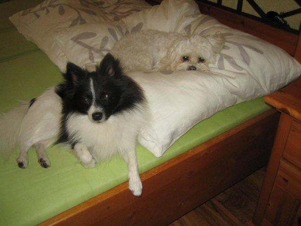 Haustiere 'meine Hundis'