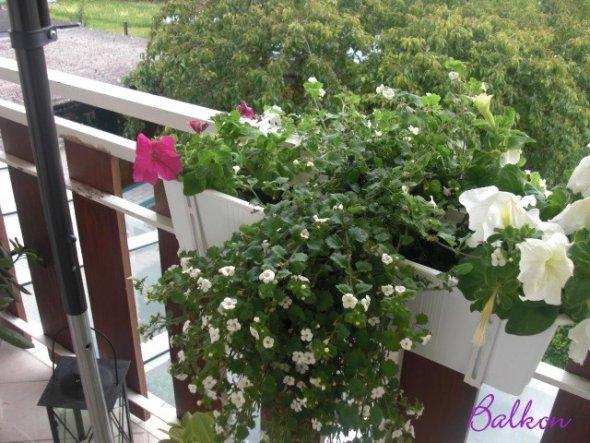 So langsam kommt die Blumenpracht :-)