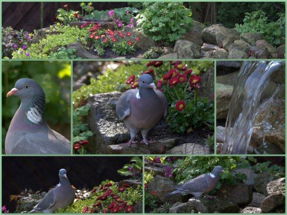 Papa und Tochter haben an einem schönen Frühsommertag 2011einige Vögel am Bachlauf beobachtet...die Taube ließ sich sogar fotografieren...!