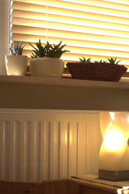 Sonnenschein fällt fast den ganzen Tag in Jacqi´s Zimmer...und das lieben die Wüstenpflanzen ja auch!