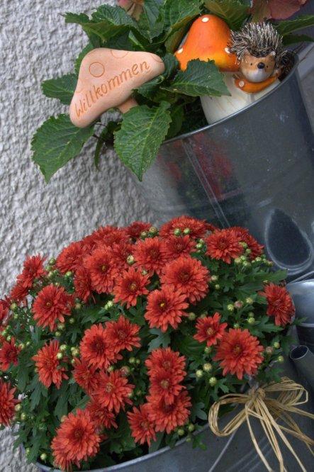 Igelchen und Crysantheme begrüßen nicht nur die Besucher, sondern auch schon den Herbst!