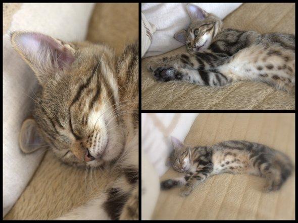 Schlafenszeit.....ein kleiner Räuber muss auch genügend Kraft tanken, für das Abenteuer Leben....! ♥Lenny, das Katerchen meiner Freundin!