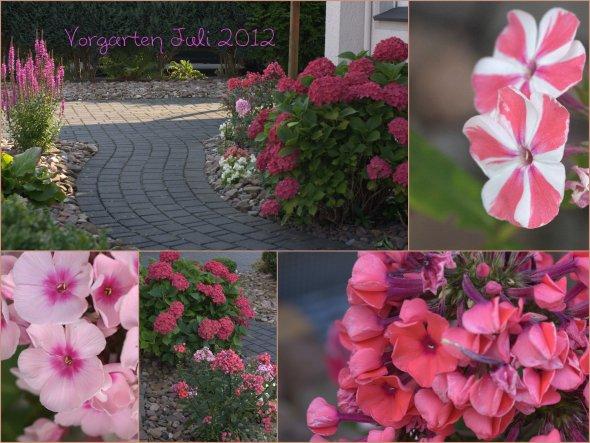 im Vorgarten ist der Phlox auch dieses Jahr wieder in voller Pracht erwacht....und die Hortensie (im Einzugsjahr 2004 als kleine Topfpflanze bekommen)