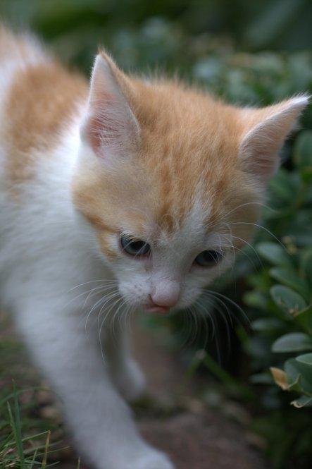 """Katzenkinder einer Freundin...alle drei waren """"Pommes-rot-weiß-Katzen""""-Damen ;-) wobei ganz rote wirklich wohl überwiegend Kater sind"""