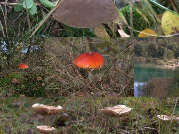 Oktober 2012: Haben ein wunderschönes Tauchwochenende in Hemmoor im Cuxhavener Land am Kreidessee verlebt. Auf einem Spazierganz sind wir buchs