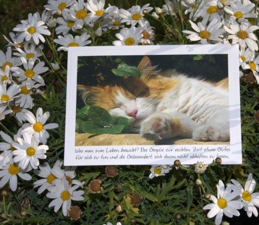 Habe von Sabine diese schöne Karte bekommen! Vielen vielen Dank!!
