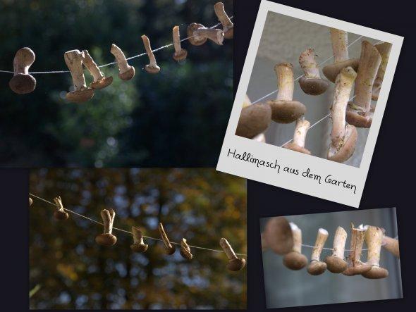 im eigenen Garten geerntet... und weil´s so viele waren, haben wir einige zum Trocknen aufgehängt... Hallimasch ♥
