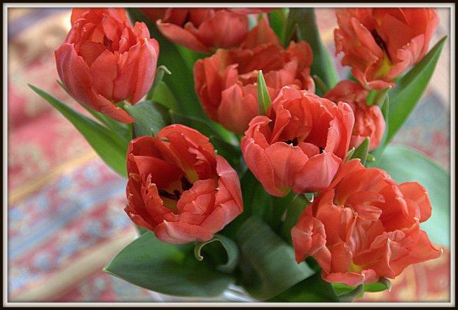 ein Tulpengruß.... wünsche allen einen guten Wochenstart!